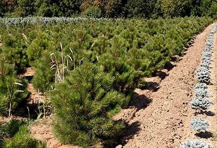 plant-photo-440×300-03